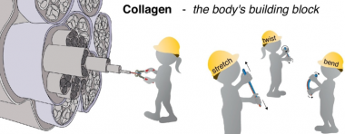Mechanics and structural stability of the collagen triple helix