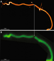 In tendons, differing physiological requirements lead to functionally distinct nanostructures